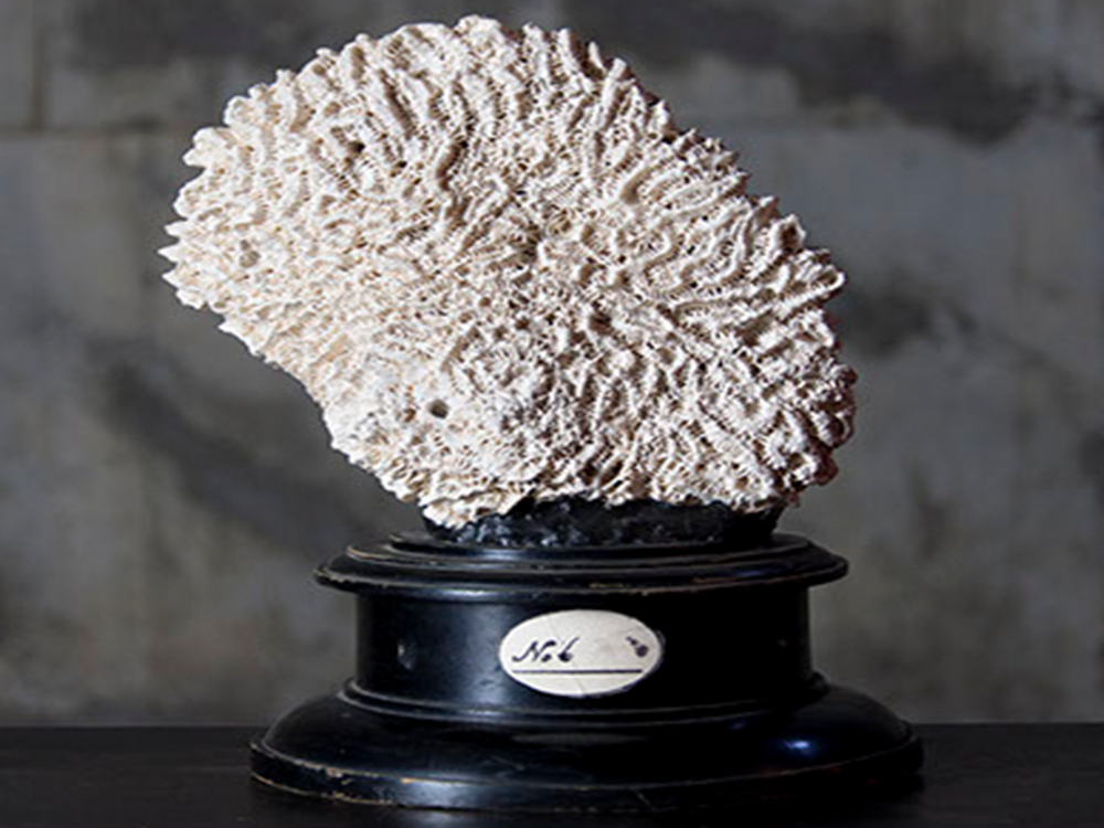 Coral object