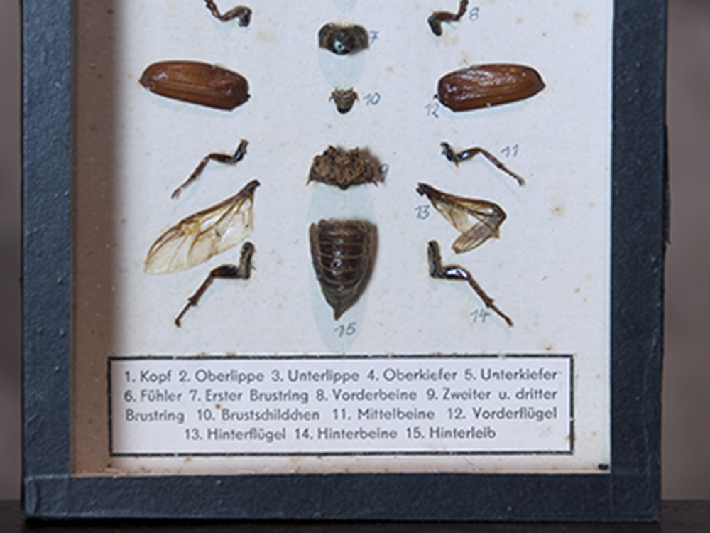 Bug specimen